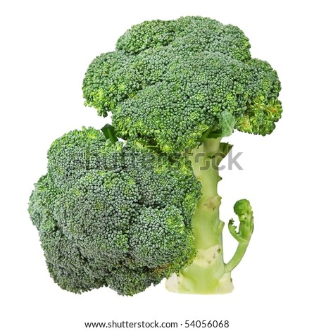 Broccoli Cabbage isolated on white . - stock photo
