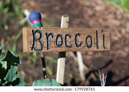 Broccoli inscription. Broccoli Seedling - stock photo
