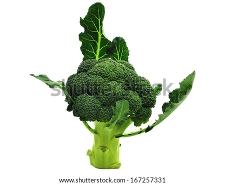 Broccoli isolated on white background  - stock photo