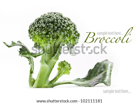 Broccoli isolated on white background (with sample text) - stock photo
