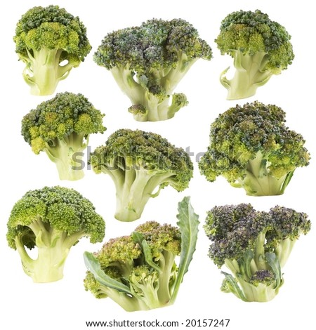 Broccoli. Isolated with clipping path