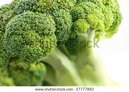 Broccoli on white background - stock photo