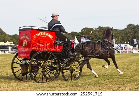 BROCKENHURST, UK - JULY 31: An unnamed driver parades his award winning Hackney carriage and pony around the arena for the judges to comment on at the New Forest show on July 31, 2014 in Brockenhurst - stock photo