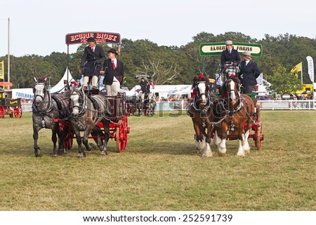 BROCKENHURST, UK - JULY 31: Entrants competing in the heavy horse category give a display of synchronised manoeuvring around the main arena at the New Forest Show on July 31, 2014 in Brockenhurst - stock photo
