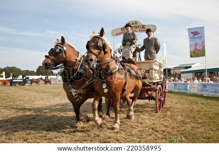 BROCKENHURST, UK - JULY 31: The heavy horse and wagon teams give a display to the public demonstrating their driving ability at the New Forest show on July 31, 2014 in Brockenhurst  - stock photo