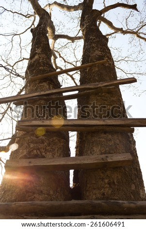 Broken and old ladder of a tree house. With light flare. Vintage and high contrast style. - stock photo