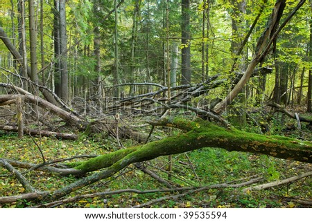 Broken branches lying with moss wrapped one in foreground - stock photo