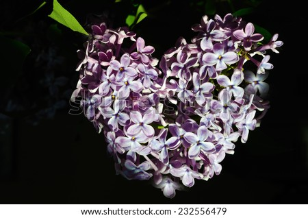 broken heart, petals lilac heart shaped (Valentine's Day, February 14, postcard, love, ecology - concept) - stock photo