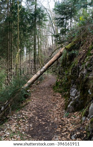 Broken log on a trail - stock photo