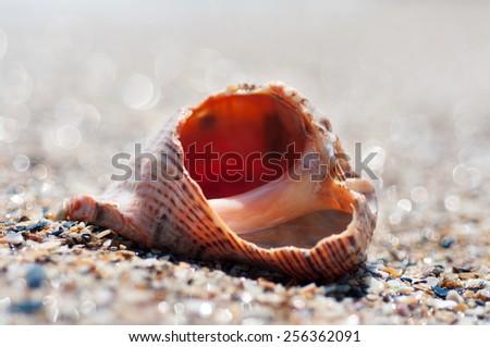 Broken sea shell on the sandy beach - stock photo