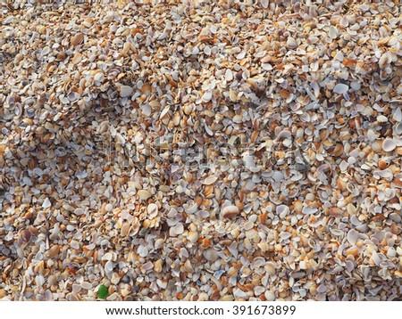 Broken seashells background - stock photo