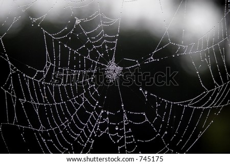 broken web - stock photo