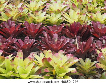 Bromeliad in the saplings