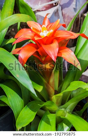 Bromeliad simulated  tropical forest of South America - stock photo