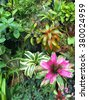 Bromeliads Garden (Tropical Biome, Gardens By the Bay, Singapore) - stock photo