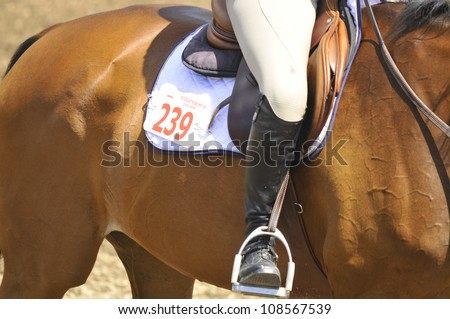 BROMONT-CANADA JULY 25: Thoroughbred horse close-up during 2012, INTERNATIONAL BROMONT on July 25, 2012 At the Equestrian 1976 Montreal Olympic Park. - stock photo