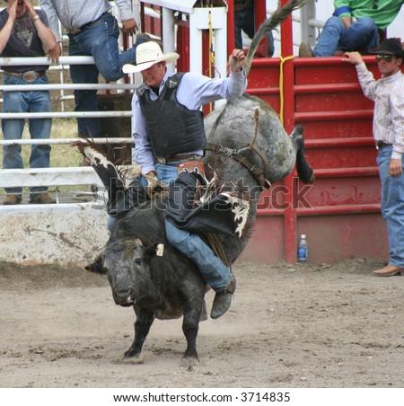 bronc rider - stock photo