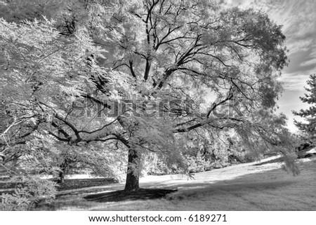 Bronx Botanical Garden , New York city - infra red  - - stock photo
