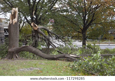 BRONX, NY - October 30: Trees collapsed in park near Yankee Stadium after hurricane Sandy passed through the Northeast the evening before.  Photographed October 30, 2012 in New York. - stock photo