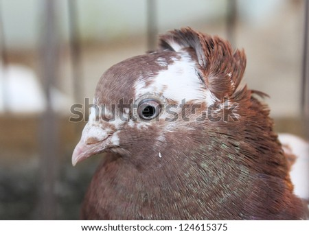 Brooding dove on the iron cage - stock photo