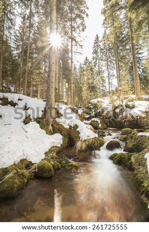 brook in black forest, Germany  - stock photo