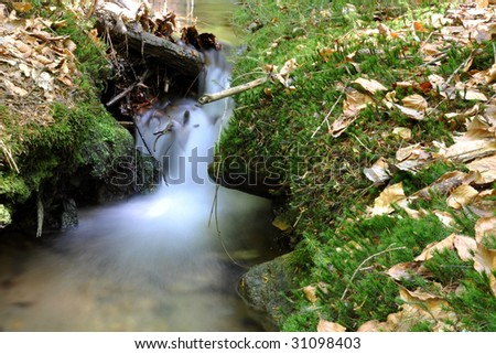 Brook in forest - stock photo