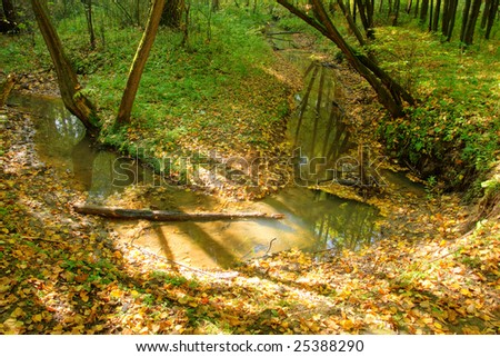 brook in forest with sunlight rays - stock photo