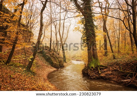 Brook in the autumn forest - stock photo
