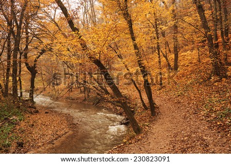 Brook in the autumn forest
