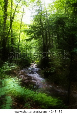 Brook in the forest, with sunrays spilling through the trees - Pflume Gorge Park, New Hampshire