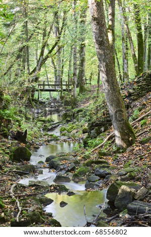 Brook in the woods with a bridge - stock photo