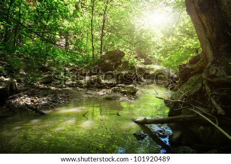 brook in wood - stock photo