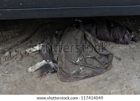 BROOKLYN, NY - NOVEMBER 01: Dead dog at Seagate neighborhood covered with jacket, died due to impact from Hurricane Sandy in Brooklyn, New York, U.S., on Thursday, November 01, 2012. - stock photo