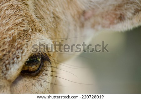brow-antlered deer live in the zoo - stock photo