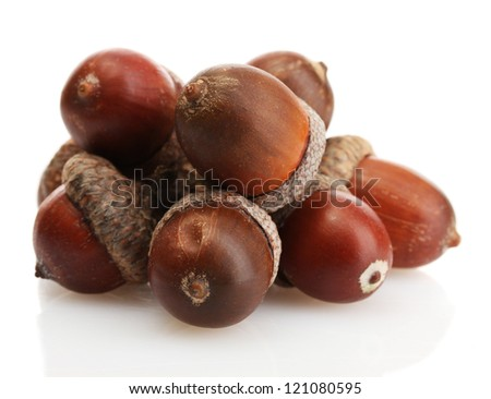 brown acorns, isolated on white - stock photo