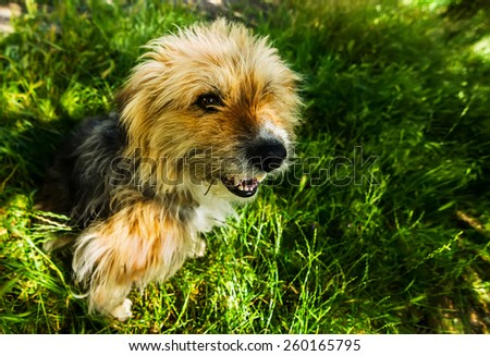 Brown and Black Dog Sitting Joyfully on a Grass Field  - stock photo