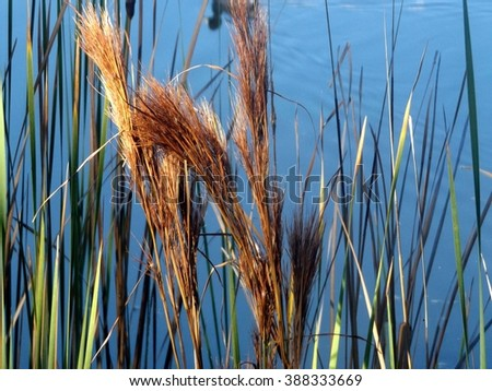 brown and green vegetation, shadow of a duck reflecting on pond - stock photo