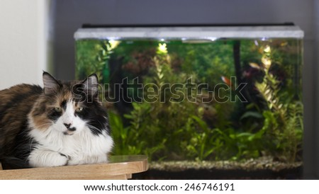 Brown-and-white cat relaxing on chair next to fish tank. Focus on cat with out of focus aquarium in background. - stock photo