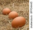 brown and white eggs on hay - stock photo