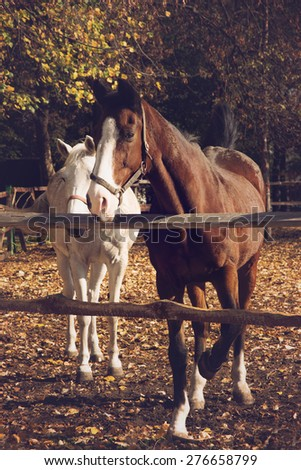Brown and white horses on autumn background - stock photo