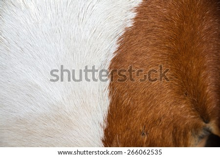 Brown and white skin horse close up texture as background. - stock photo