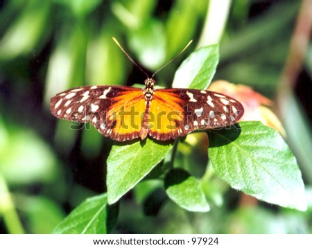 Brown and Yellow Butterfly - stock photo