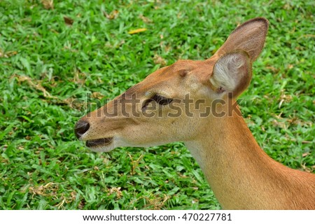 Brown antlered deer on green