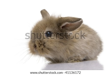 Brown baby rabbit in front of a white background, studio shot