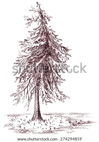 Brown banked monochrome tree isolated - stock photo