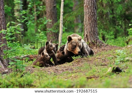 Brown bear family - stock photo
