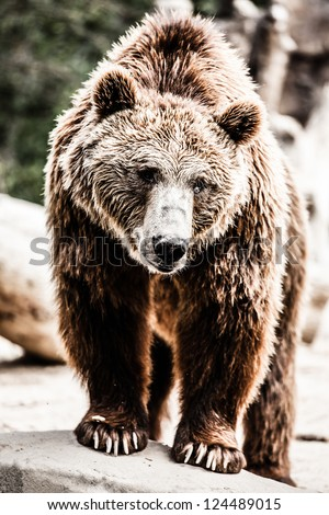 Brown bear in a funny pose ( HDR image ) - stock photo