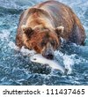 Brown bear on Alaska - stock photo