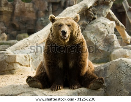 Brown bear sitting on a rock in a funny pose - stock photo