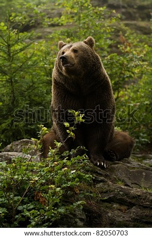Brown bear sitting on rock